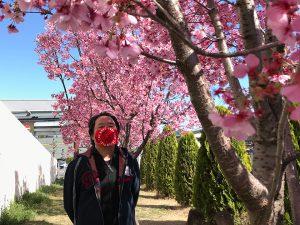 路地で見つけた今年の桜&広規マスク(2)